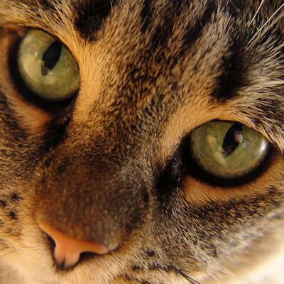 Heart disease in your cat