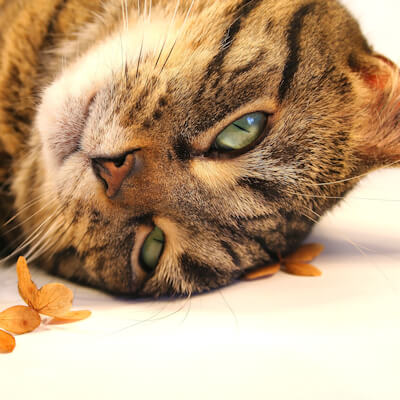 Fitting in cats – an emergency?