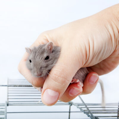 Gerbils: How To Handle