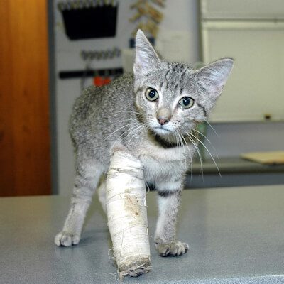 Pet Insurance For Your Cat - Forest Veterinary Clinic