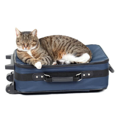 Taking your pet abroad